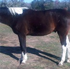 WB gelding after his 3rd treatment, total balance and reorganization
